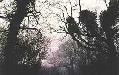 The Clapham Wood Mystery