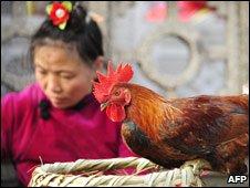 _45850208_chicken226