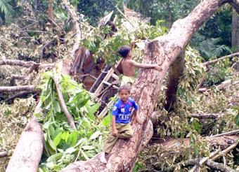 Anak–anak memperhatikan rumah milik keluarga M Hasyem yang hancur total tertimpa pohon durian. Angin puting beliung juga menghancurkan puluhan rumah lainnya di sejumlah desa di Aceh Utara. (Harian Aceh | Zulkifli)