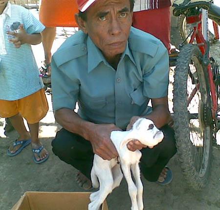 Seorang warga memegang anak kambing aneh yang telah mati. Kambing ini lahir Selasa (28/7) siang.