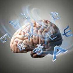otak300